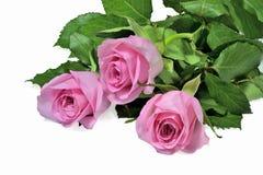 在白色背景的桃红色玫瑰花束 免版税库存图片