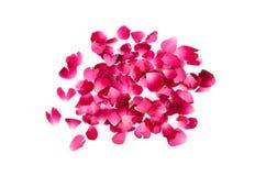 在白色背景的桃红色玫瑰花瓣堆 库存图片