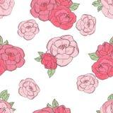 在白色背景的桃红色玫瑰 库存图片