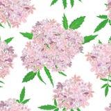 在白色背景的桃红色花纹花样 库存图片