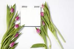 在白色背景的桃红色郁金香作为一张明信片对华伦泰` s天 免版税库存照片