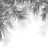 在白色背景的棕榈树分支 r 免版税库存照片