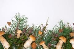 在白色背景的森林蘑菇 免版税图库摄影