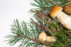 在白色背景的森林蘑菇 库存照片