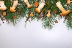 在白色背景的森林蘑菇 免版税库存图片