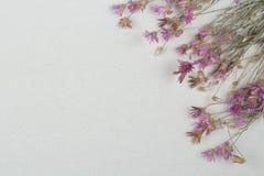 在白色背景的正确的花框架 免版税图库摄影