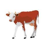 在白色背景的母牛 免版税库存照片