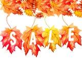 在白色背景的汇集美丽的五颜六色的秋叶 免版税库存照片