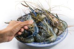 在白色背景的河虾 免版税库存照片