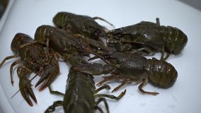 在白色背景的活小龙虾,在烹调前的小龙虾 股票视频