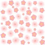 在白色背景的浅粉红色的花 免版税库存照片