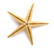 海星,海星和壳。 库存照片