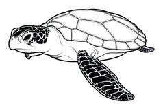 在白色背景的海龟动物动画片 皇族释放例证