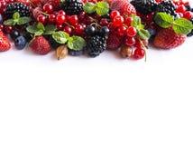 在白色背景的混合莓果 成熟红浆果,草莓,黑莓,蓝莓,黑醋栗,鹅莓 免版税库存照片