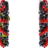 在白色背景的混合莓果 成熟红浆果,黑莓,蓝莓,与在白色背景的薄荷叶 顶视图 库存图片