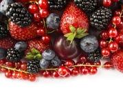 在白色背景的混合莓果 莓果和果子与拷贝空间文本的 黑蓝色和红色食物 成熟黑莓, bluebe 库存照片