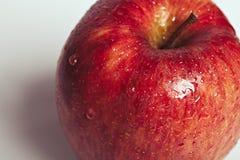 在白色背景的湿水多的红色苹果计算机特写镜头 免版税图库摄影