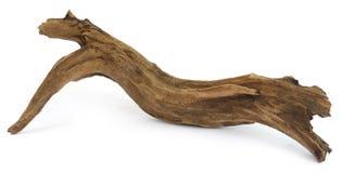 在白色背景的漂流木头 库存图片