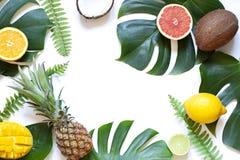 在白色背景的热带叶子和果子夏天概念框架 库存图片