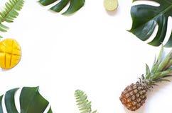 在白色背景的热带叶子和果子夏天概念框架 图库摄影