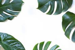 在白色背景的热带叶子夏天概念框架 r 库存照片