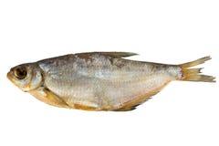 在白色背景的熏制的鱼 图库摄影