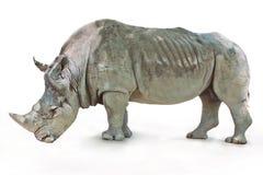 在白色背景的犀牛 库存照片