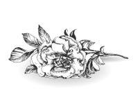 在白色背景的狂放的玫瑰色花 向量 免版税库存图片