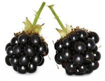 在白色背景的狂放的黑莓 免版税库存照片