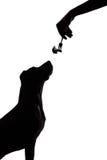 在白色背景的狗剪影凝视食物 免版税图库摄影