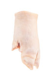 在白色背景的猪的小跑步马 免版税图库摄影