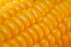 在白色背景的玉米明亮的水多的素食射击 免版税库存图片