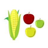 在白色背景的玉米棒子 动画片重点极性集向量 免版税图库摄影