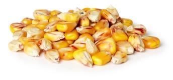 在白色背景的玉米种子 免版税库存照片
