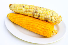 在白色背景的玉米 库存照片