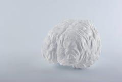 在白色背景的白色人脑。 库存照片
