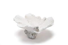 在白色背景的白色花型珊瑚小装饰品 图库摄影