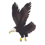在白色背景的白头鹰 库存例证
