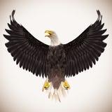 在白色背景的白头鹰 皇族释放例证