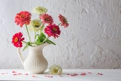 在白色背景的百日菊属花 库存图片