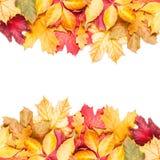 在白色背景的秋天叶子 库存图片
