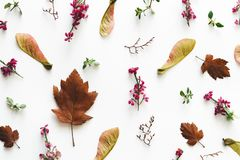 在白色背景的秋天安排 库存照片