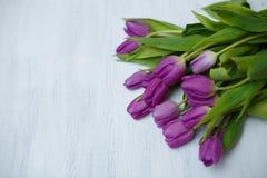 紫色郁金香价格_在白色背景的紫色郁金香.