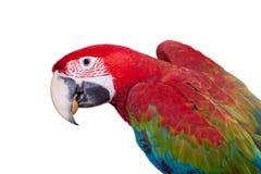 在白色背景的红和绿的金刚鹦鹉 库存照片