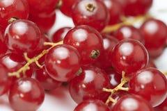 在白色背景的红浆果 免版税库存图片