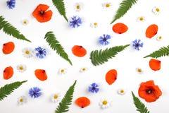 在白色背景的红色领域鸦片、雏菊、矢车菊和绿色叶子样式 图库摄影