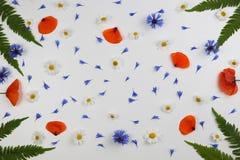 在白色背景的红色领域鸦片、雏菊、矢车菊和绿色叶子框架 免版税图库摄影