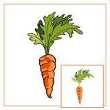 在白色背景的红萝卜 向量例证