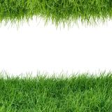 在白色背景的绿草孤立, 免版税库存照片