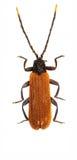 在白色背景的网飞过的甲虫 库存图片